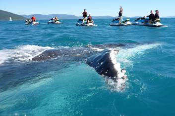 Whale Watching Whitsundays