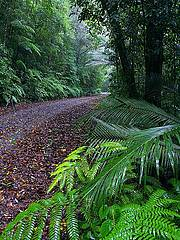 high altitude wet tropical wilderness