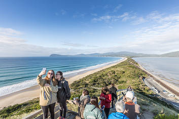 The Neck Wildlife Zone and Penguin Rookery and Beaches Bruny Island Safaris